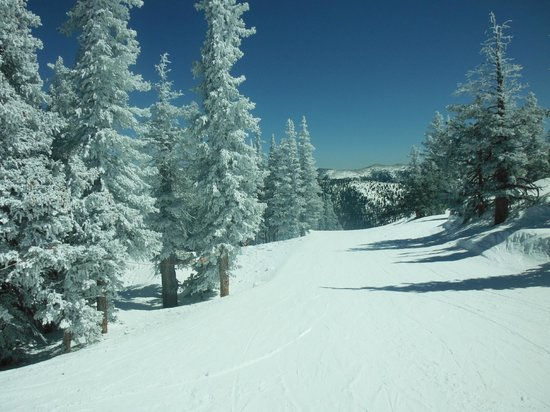Monarch Mountain: Fresh powder