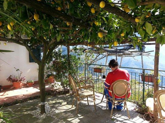 Ravello Rooms: Breakfast in the lemon grove