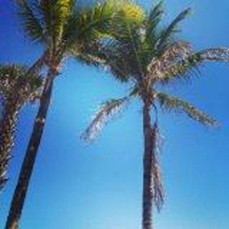 Hollywood Beach : palm