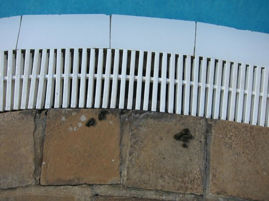 Hilton Sandton: Excrement by the pool