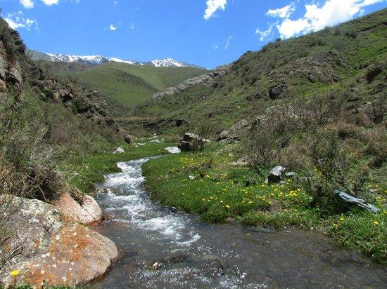Tupungato, Argentina: Primavera en La Quebrada del Cóndor