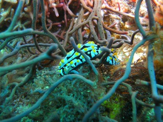 Blue Ribbon Dive Resort : diving