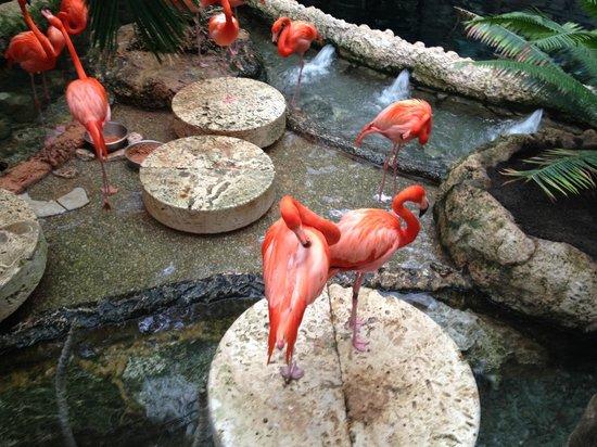 Dallas World Aquarium : Flamingos