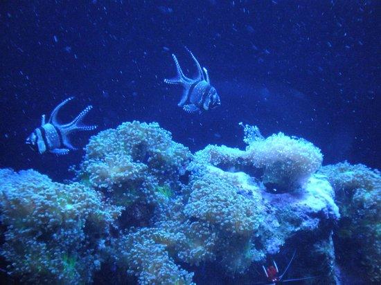 Dallas World Aquarium : Tropical Fish