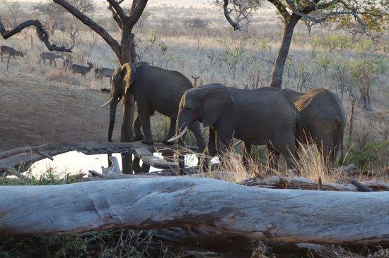 Tarangire Treetops: Elephants at the watering hole