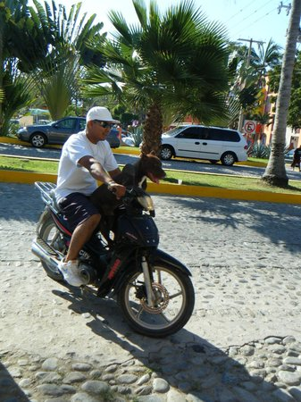 Royal Decameron Complex: Dog loves the bike
