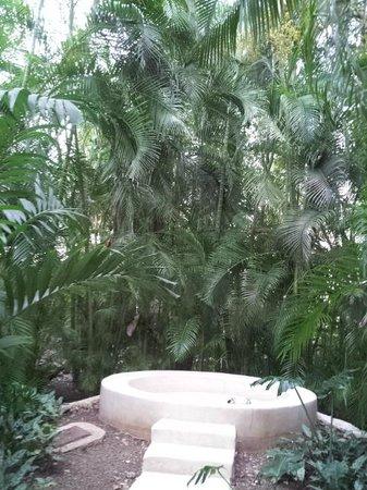 Hacienda San Jose, A Luxury Collection Hotel, San Jose : Beautiful landscaping on the grounds of Hacienda San Jose