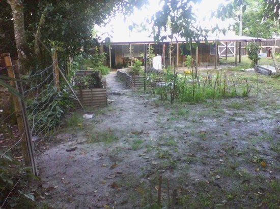 Valadares Island : VISTA DO CANTEIRO DA MINHA HORTA
