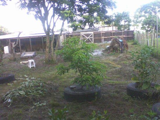 Valadares Island : ARVORES DE FRUTAS ENCHERTADAS