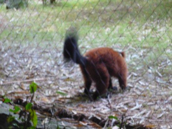 Nashville Zoo: Squirrel