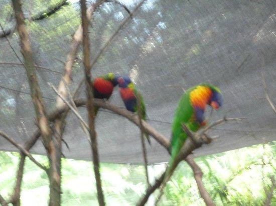 Nashville Zoo: Tropical Birds