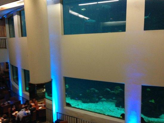 Alohilani Resort Waikiki Beach : The Oceanarium