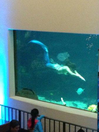 Alohilani Resort Waikiki Beach: Mermaid Show at the Oceanarium