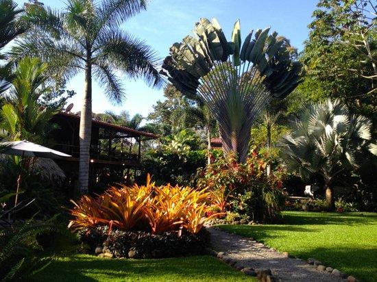 Hotel Banana Azul: More gardens...