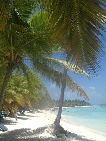 Isla Saona: beach