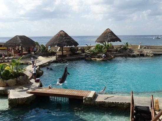 Dolphinaris Cozumel: april 2014