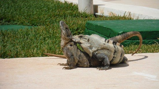 Omni Cancun Resort & Villas: You can see this guys every morning.