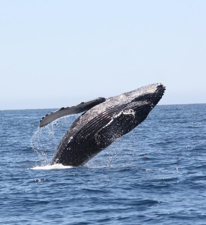 Hacienda del Mar Los Cabos : Whale Watching on a Zodiac -- fabulous!