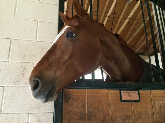 Hope Hall Farm: Our favorite horse