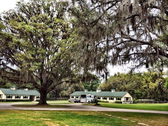 Hope Hall Farm: Hotel Grounds