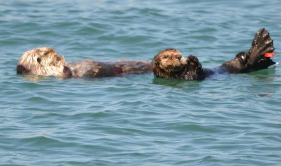 Sub Sea Tours and Kayaks: Otter & Pup