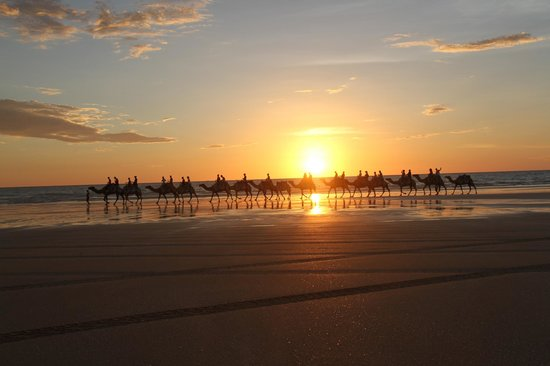 Broome Camel Safaris : Blue Camel Ride at Sunset in Cable Beach Broome!