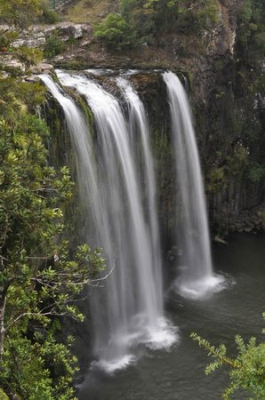 Whangarei Falls : Main Falls