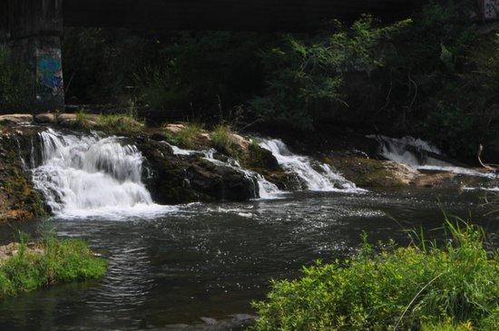 Whangarei Falls : Upper falls