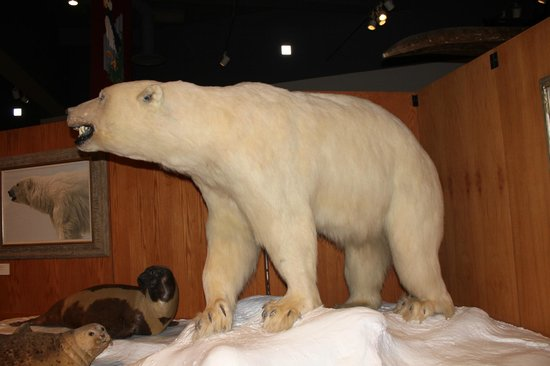 University of Alaska Museum of the North : Exhibit