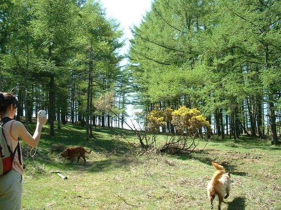Casa Rural Haitzetxea: Senderismo desde Haitzetxea