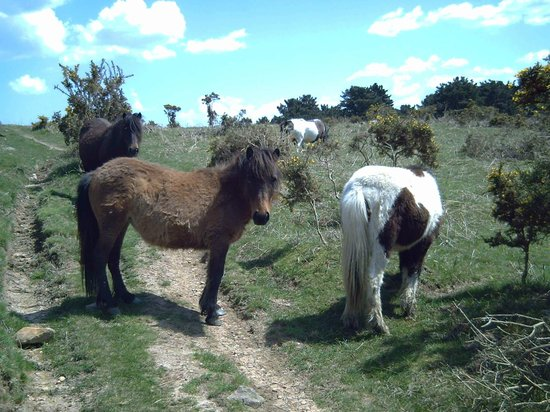 Casa Rural Haitzetxea: Las Pottokas, raza caballar de la zona.