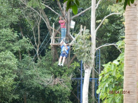 Treetop Tour Cable Ride: getting the hang of it