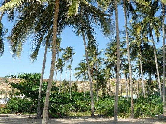 Duy An Guest House : общий пляж