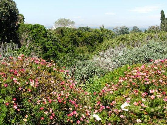 Bluff Hill Lookout: Part of garden