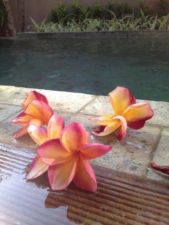 ASA Bali Luxury Villas: Villa pool