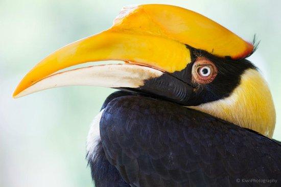 Cape Panwa Hotel: Hornbill