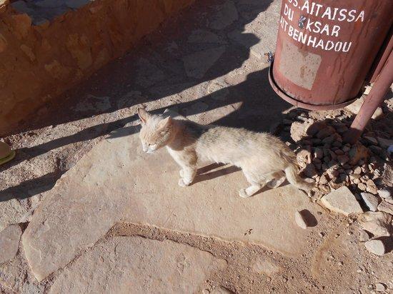 Casbah d'Aït-ben-Haddou : ネコがやっぱりたくさん