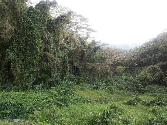 Manoa Falls: Rainforest along hike trail