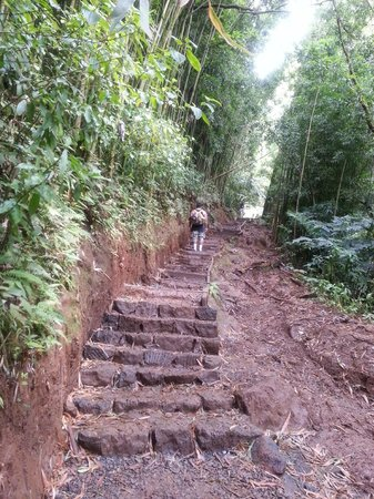 Manoa Falls: Walking track to Manoa Waterfalls