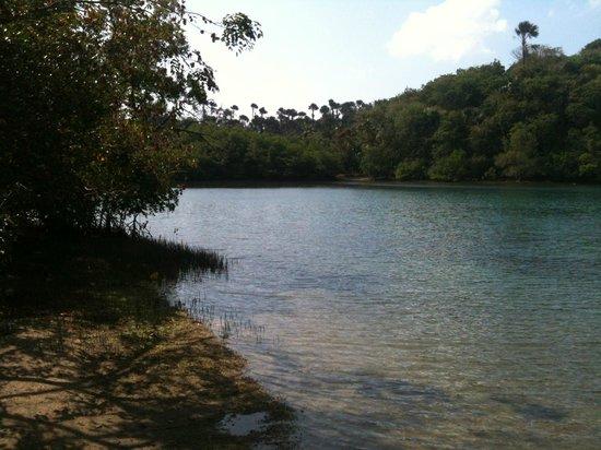 Kalaw's Place: mangrove, beach
