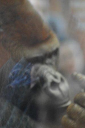ZSL London Zoo : finger