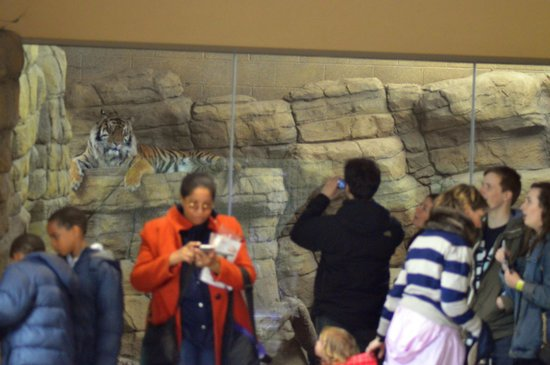 ZSL London Zoo: Jae Jae watches us ,watching him from his heated enclosure