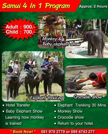 Funny Day Safari - Bophut Elephant Camp