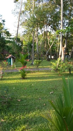 Abad Turtle Beach : Garden Area