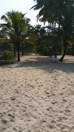 Abad Turtle Beach : Green Beach Area