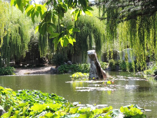 Chinese Garden of Friendship: Small lake with natural rock