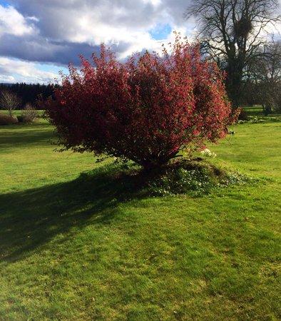 Kincraig Castle Hotel: Garden
