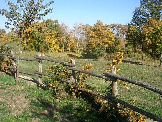 La Contea Degli Angeli: Esterno: i colori dell'autunno