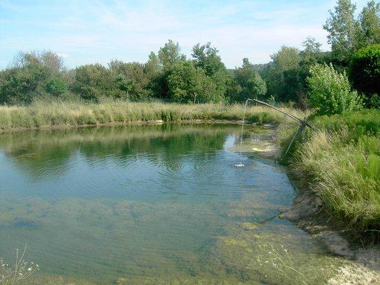 La Contea Degli Angeli : Il laghetto