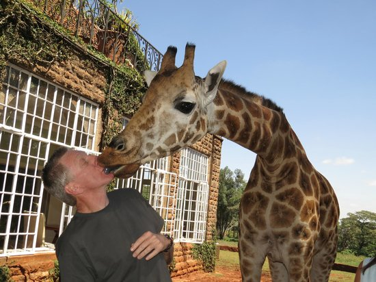 Giraffe Manor : Big kiss.
